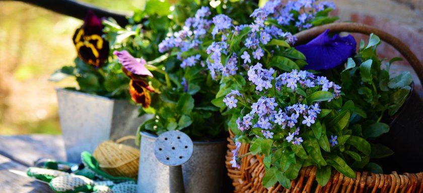 Langes Wochenende - Gartenarbeit